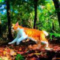 猫と森で暮らす